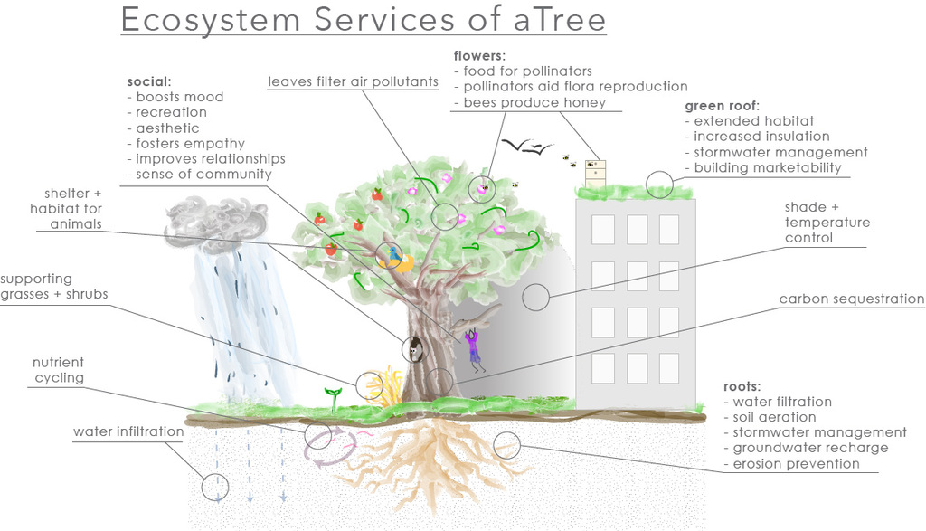 Servicing Those Ecosystems The Value Of Trees Fmlink