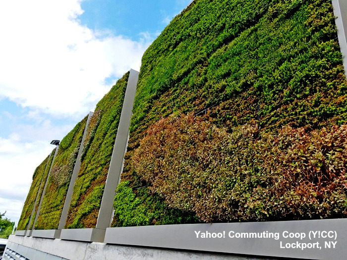 Y!CC living wall