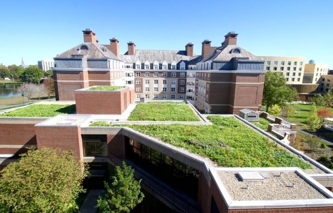 Meadow roof at Harvard Business School