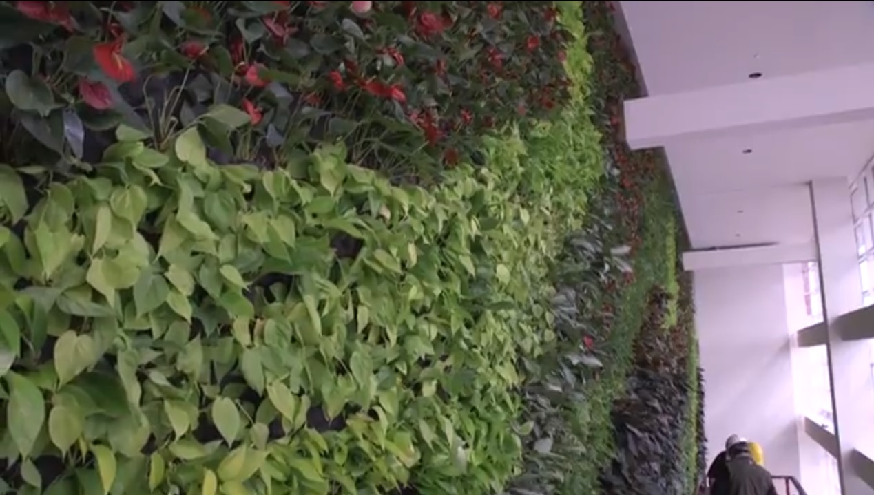 2nd Cleveland plant wall