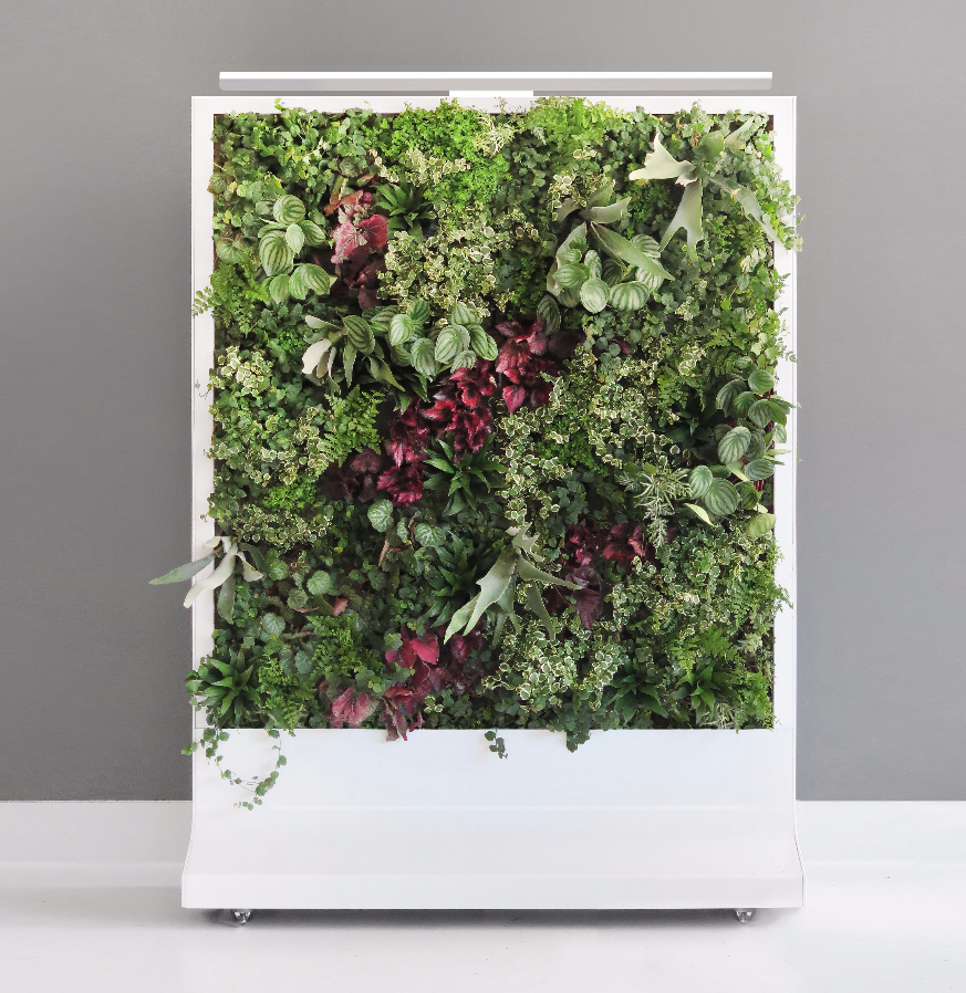 A freestanding living wall with a white frame and colorful greenery