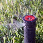 Irrigation spray head on lawn
