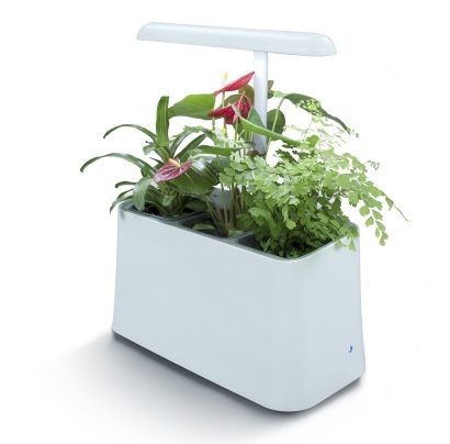 Rectangular white container with 3 plants and an LED light