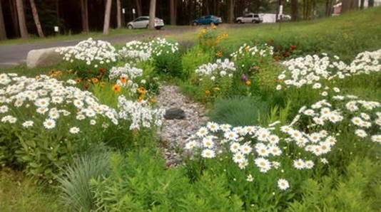 Figure 2: Rain Garden at the VA Central Western Massachusetts Healthcare System Facility in Leeds, MA (From USAF)